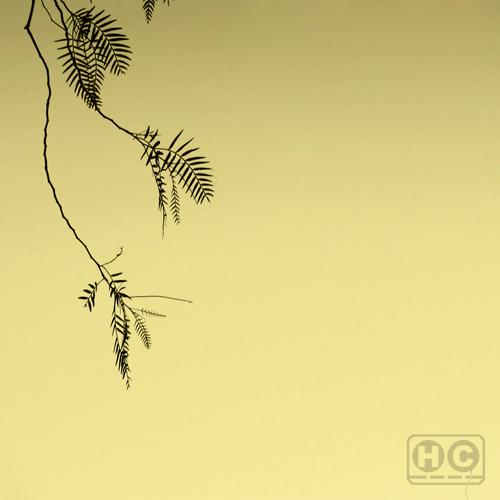 PvC - Stillness