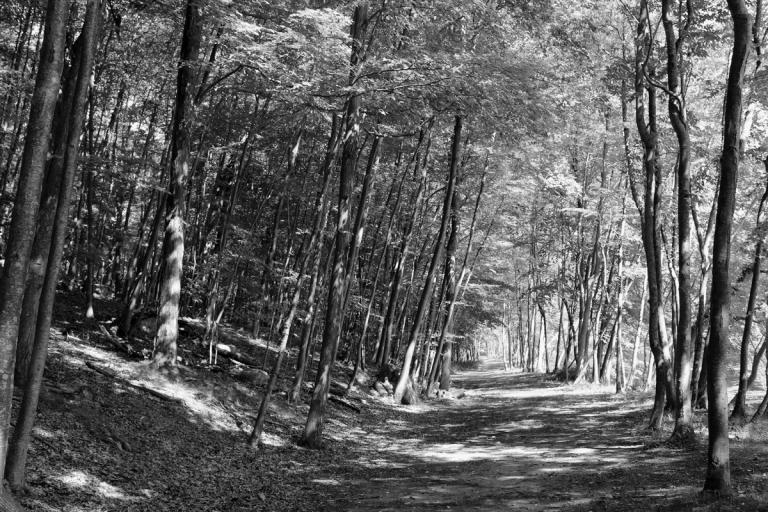 forest_inspiration.jpg